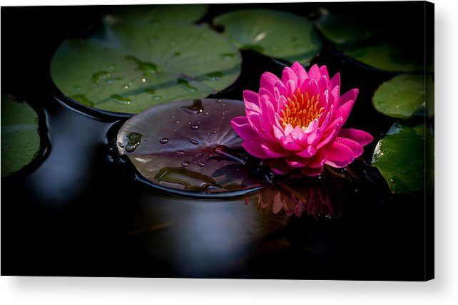 Pink Lily Acrylic Print featuring the photograph Fire Opal 4 by Jeff Partridge