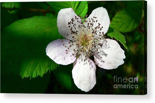 Flower Acrylic Print featuring the photograph Flower In Shadow by Larry Keahey