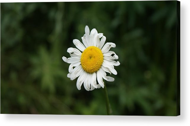 Flower Acrylic Print featuring the photograph Flowers 14 by Nitin Kaul