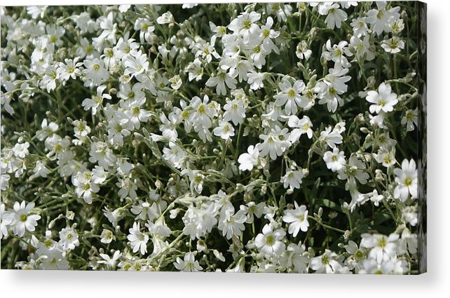 Flower Acrylic Print featuring the photograph Flowers 16 by Nitin Kaul