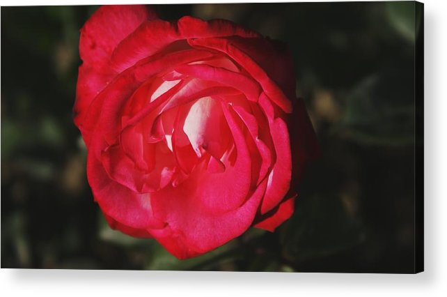 Flower Acrylic Print featuring the photograph Flowers 4 by Nitin Kaul