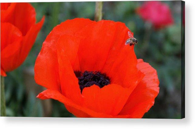 Poppy Acrylic Print featuring the photograph Flowers 7 by Nitin Kaul