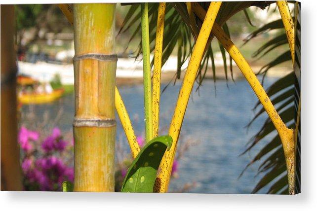 Bamboo Acrylic Print featuring the photograph Hawaii by Kathryn Carlin