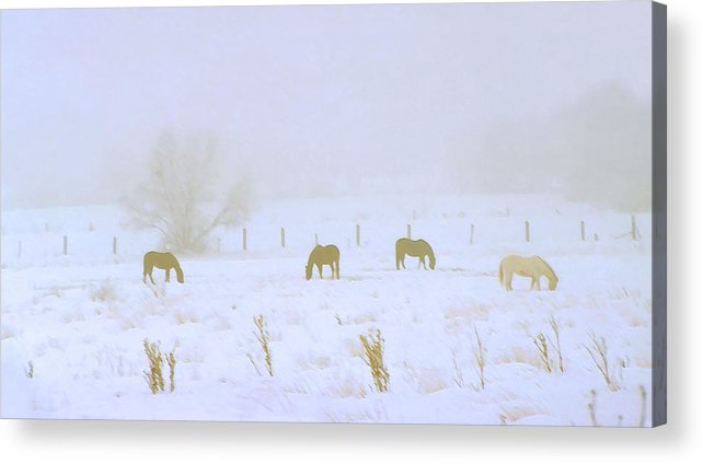 Fog; Mist; Foggy; Misty; Landscapes; Scenery; Scenic; Atmospheric; Snow; Snowy; Winter; Wintry; Cold; Seasons; Seasonal; Weather; Horses; Animals; Farming; Agricultural; Farms; Rural; Country; Farm Animals; Grazing; Grazing Horses; Field; Four Acrylic Print featuring the photograph Horses Grazing In A Field Of Snow And Fog by Steve Ohlsen