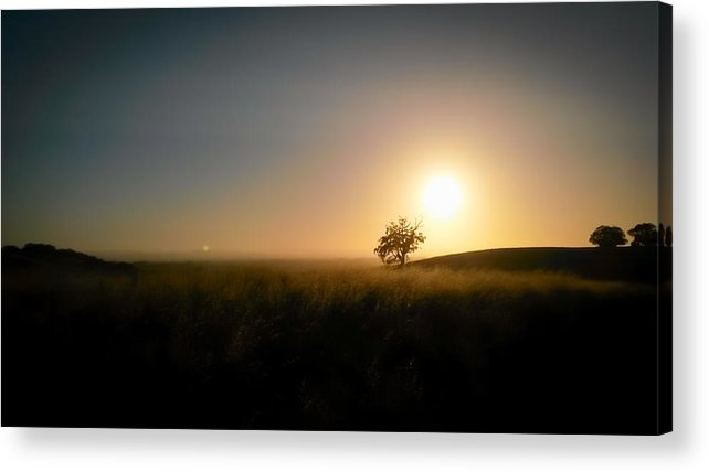 California Acrylic Print featuring the photograph How Did You Get Here? by Deb Breton