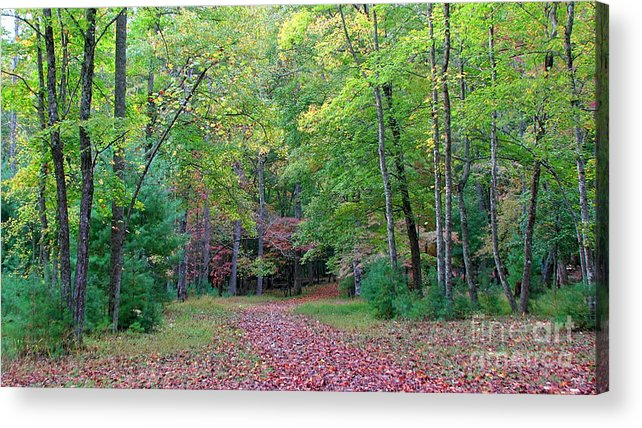 Landscape Acrylic Print featuring the photograph Into The Forest by Todd Blanchard