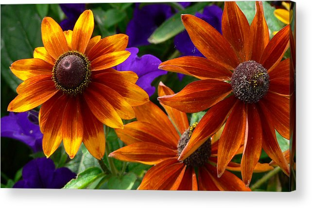 Flowers Acrylic Print featuring the photograph Layers Of Color by Larry Keahey