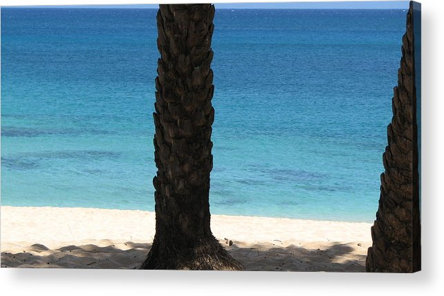 Palm Tree Acrylic Print featuring the photograph Lone Palm by Kathryn Carlin