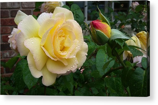 Flowers Acrylic Print featuring the photograph P0767 by Steve Herndon