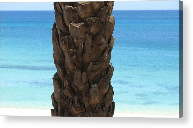Palm Acrylic Print featuring the photograph Palm by Kathryn Carlin