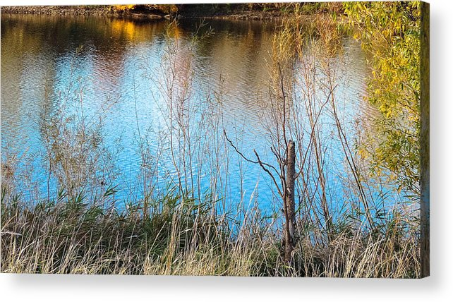 Pond Acrylic Print featuring the photograph Pond Life by Tracy Welter