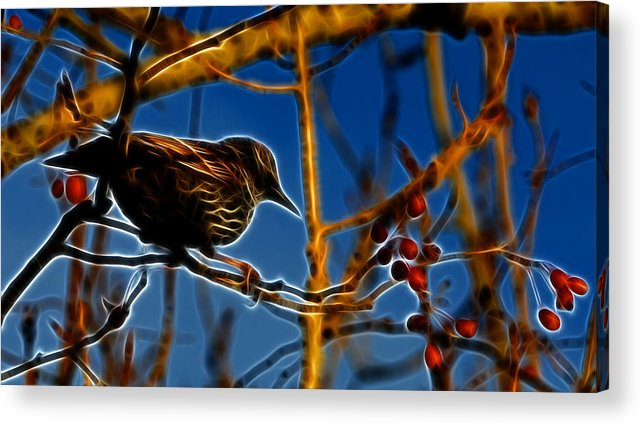 Reifel Acrylic Print featuring the photograph Starling In Winter Garb - Fractal by Lawrence Christopher