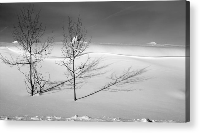 Nature Acrylic Print featuring the photograph Twins by Skip Hunt