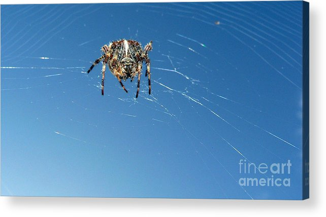 Spider Acrylic Print featuring the photograph Waiting by Larry Keahey