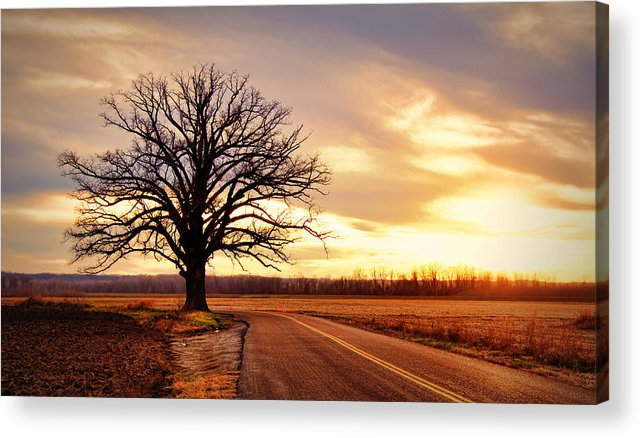 Old Acrylic Print featuring the photograph Burr Oak Silhouette by Cricket Hackmann