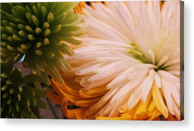 Spring Acrylic Print featuring the photograph Spring Has Sprung II by Anna Villarreal Garbis