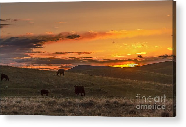 Range Acrylic Print featuring the photograph Sunset On Open Range by Robert Bales