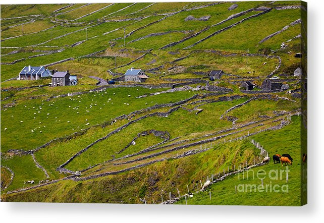 Republic Of Ireland Acrylic Print featuring the photograph Rural Landscape On Dingle Peninsula by Gabriela Insuratelu