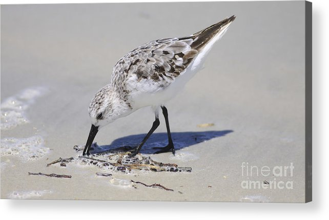 Bird Acrylic Print featuring the photograph Eating At The Shore by Deborah Benoit