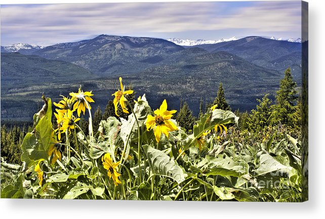 Montana Landscapes Photographs Acrylic Print featuring the photograph Nature Dance by Janie Johnson