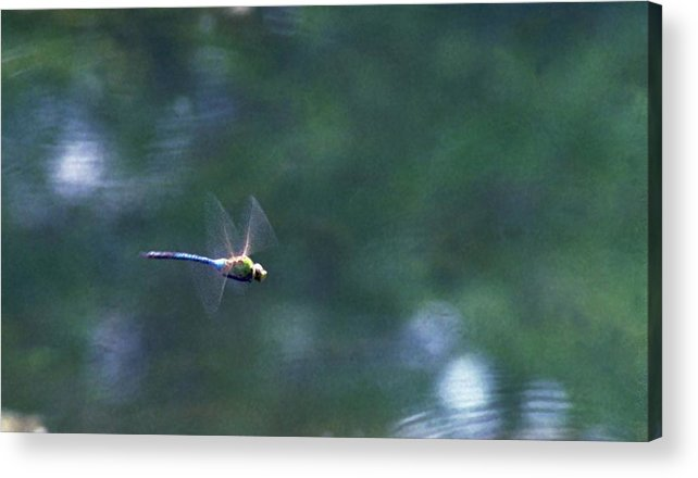 Dragonfly Acrylic Print featuring the photograph 070406-80 by Mike Davis