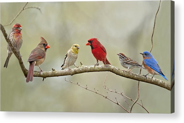 Finch Acrylic Print featuring the photograph Bird Congregation by Bonnie Barry