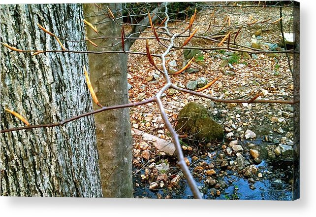 Brookside Gardens Acrylic Print featuring the photograph brookside Sring s.1 by Mpagijk Mpagijk