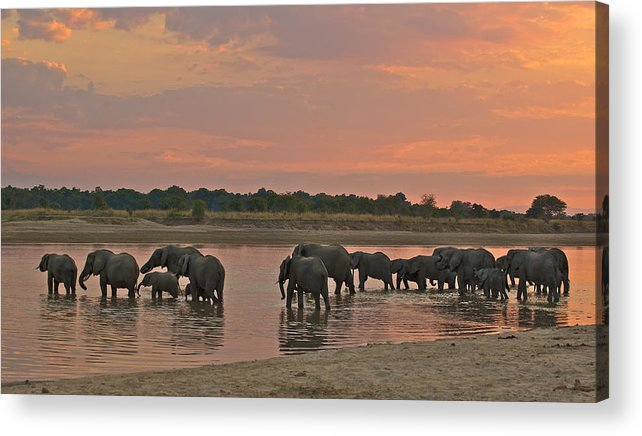 Africa Acrylic Print featuring the photograph Elephants At Dusk by Johan Elzenga