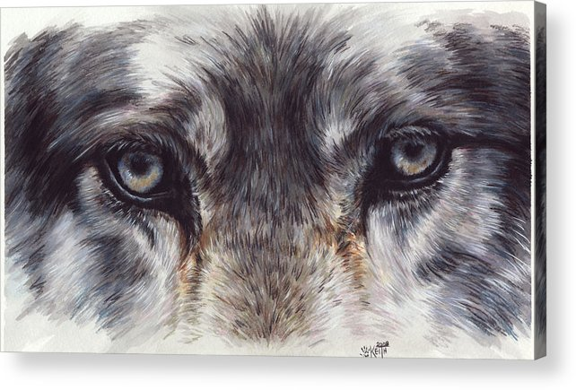 Wolf Acrylic Print featuring the painting Eye-catching Wolf by Barbara Keith