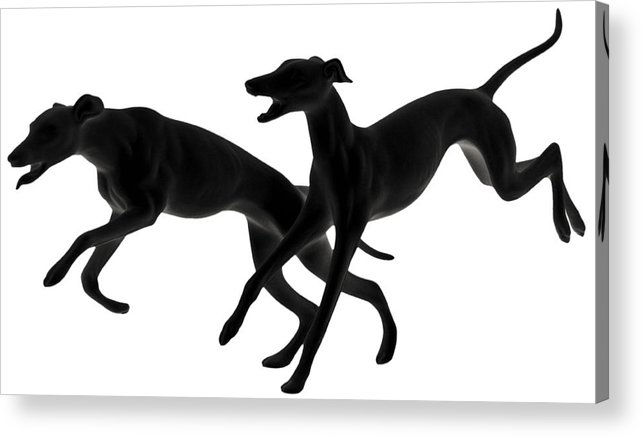 Greyhounds Acrylic Print featuring the photograph Greyhounds Travelling At 45 Mph by Christine Till