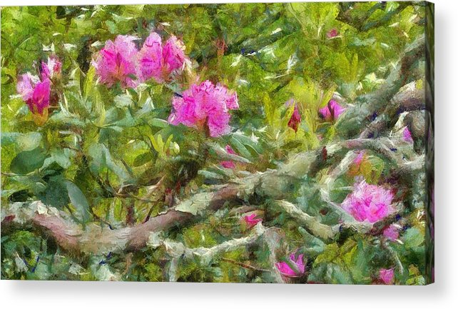 Pink Flowers Acrylic Print featuring the photograph Pink With Lichen by Judy Coggin