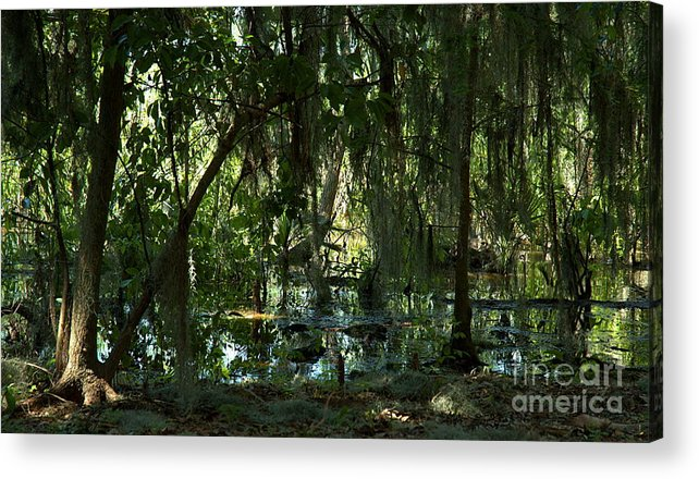 Nature Acrylic Print featuring the photograph Primordial by Kathi Shotwell