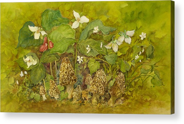 Mushrooms;trillium;spring;violets;woods;woodland;morels;watercolor Painting; Acrylic Print featuring the painting Ready For Pickin' by Lois Mountz