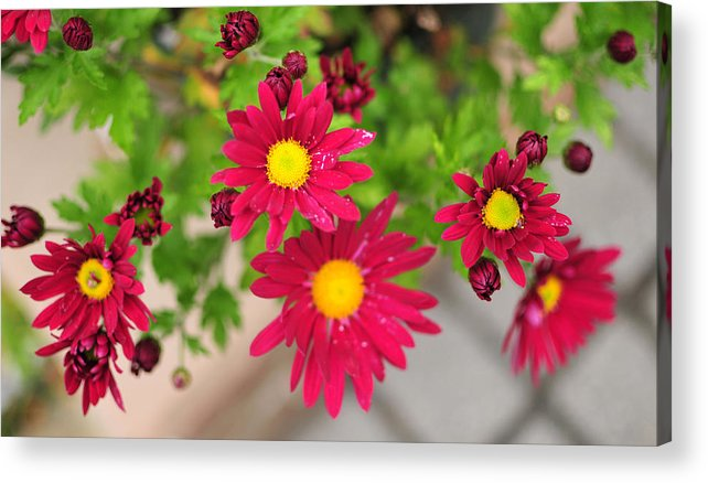Flower Red Yellow Flowers Aperature Acrylic Print featuring the photograph Untitled by Brian Foxx