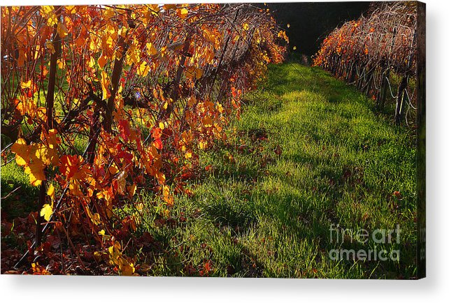 California Wine Country Acrylic Print featuring the photograph Vineyard 13 by Xueling Zou
