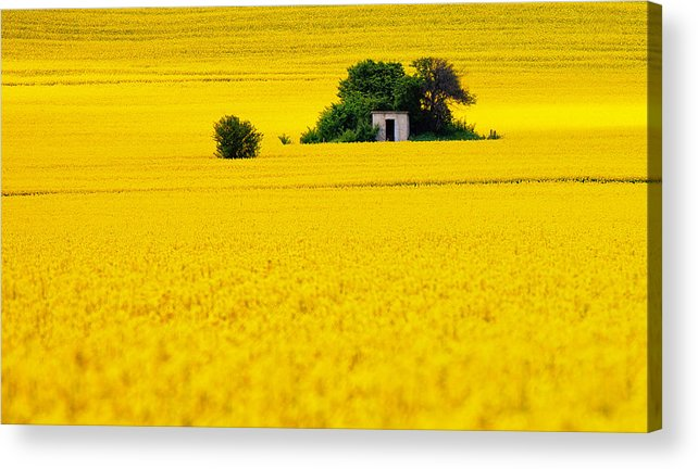Field Acrylic Print featuring the photograph Yellow by Evgeni Dinev