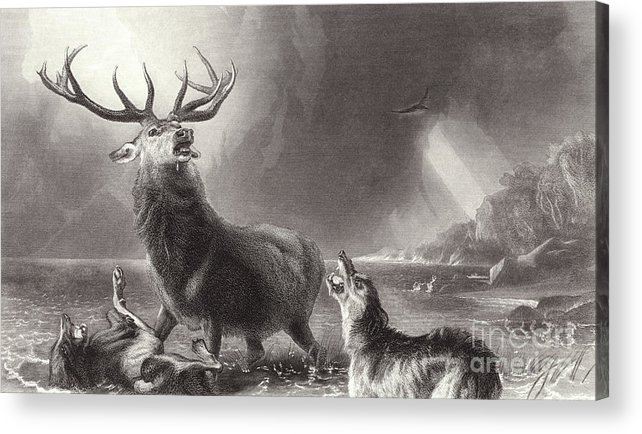 Landseer Acrylic Print featuring the drawing The Stag At Bay by Edwin Landseer