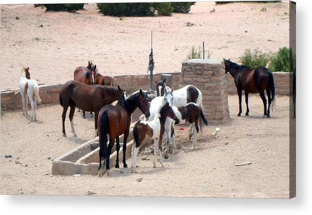 Herd Of Horses Acrylic Print featuring the photograph Navajo Herd by Susan Woodward