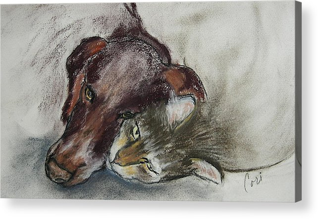 Dog Acrylic Print featuring the drawing Whisker To Whisker by Cori Solomon