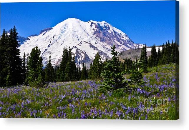 Mt Rainier Acrylic Print featuring the photograph Mt Rainier From Sunrise by Camille Lyver