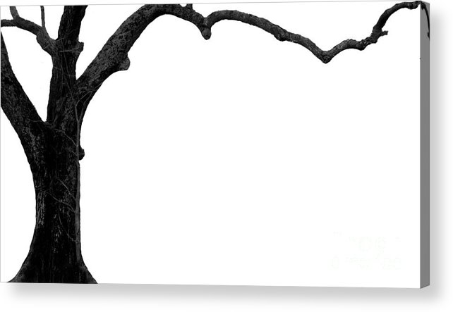 Tree Acrylic Print featuring the photograph The Tree by Amanda Barcon