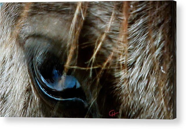 Colette Acrylic Print featuring the photograph Eye Beyond Horse Communication by Colette V Hera Guggenheim