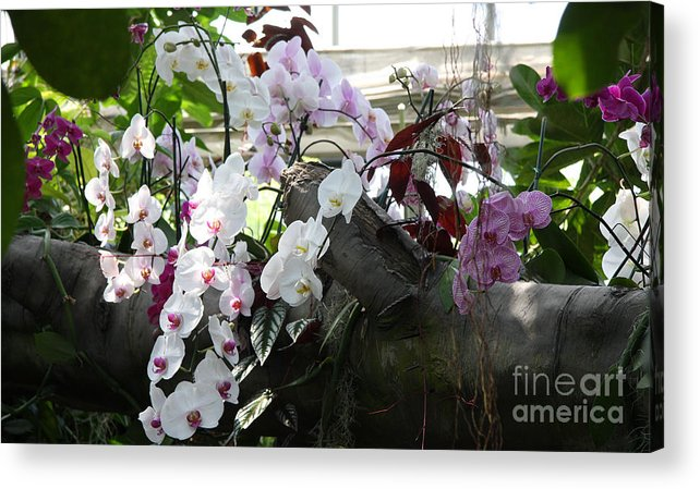 Orchid Acrylic Print featuring the photograph Orchid Branch by Christiane Schulze Art And Photography