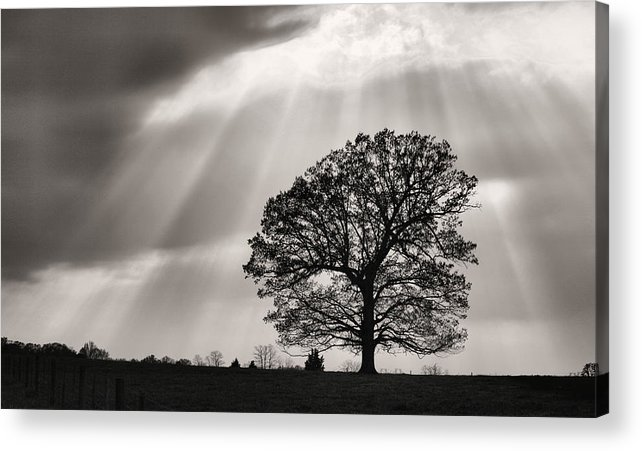 Shining Down Acrylic Print featuring the photograph Shining Down by JC Findley