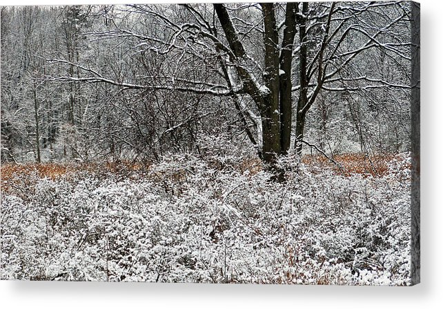 Winter Acrylic Print featuring the photograph The Beauty Of Winter by Aimee L Maher Photography and Art Visit ALMGallerydotcom