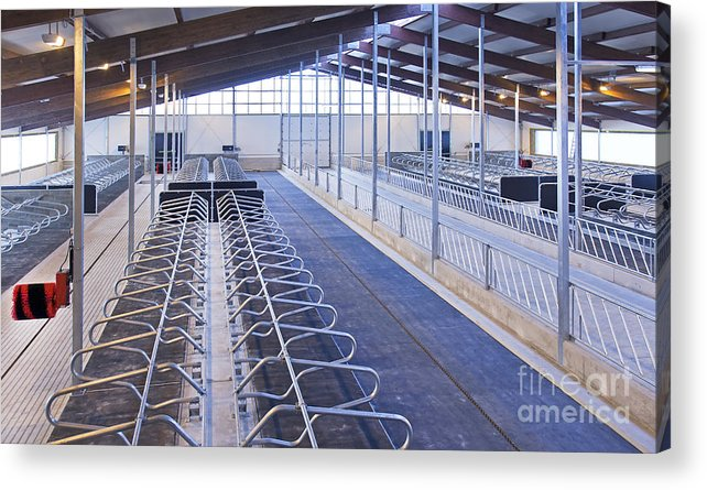 Agricultural Acrylic Print featuring the photograph Row Of Cattle Cubicles by Jaak Nilson