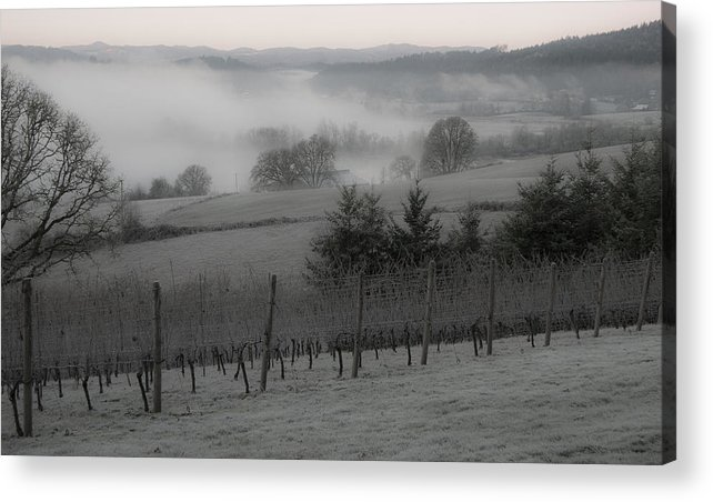 Vineyard Acrylic Print featuring the photograph Winter Vineyard by Jean Noren