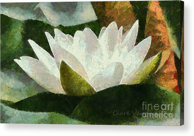 Water Lily Acrylic Print featuring the photograph Water Lily by Clare VanderVeen