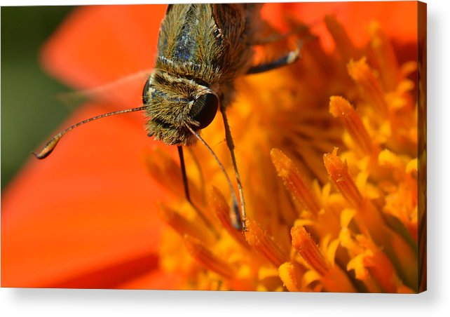 Butterfly Acrylic Print featuring the photograph Another World by MHmarkhanlon