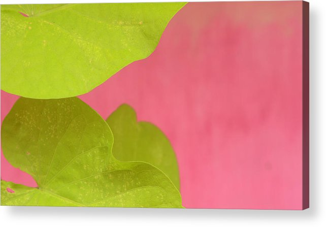 Color. Abstract Acrylic Print featuring the photograph Green On Pink 1 by Art Ferrier